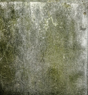 mold-685894_640