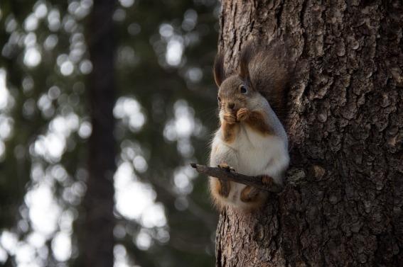 squirrel-2125021_1280