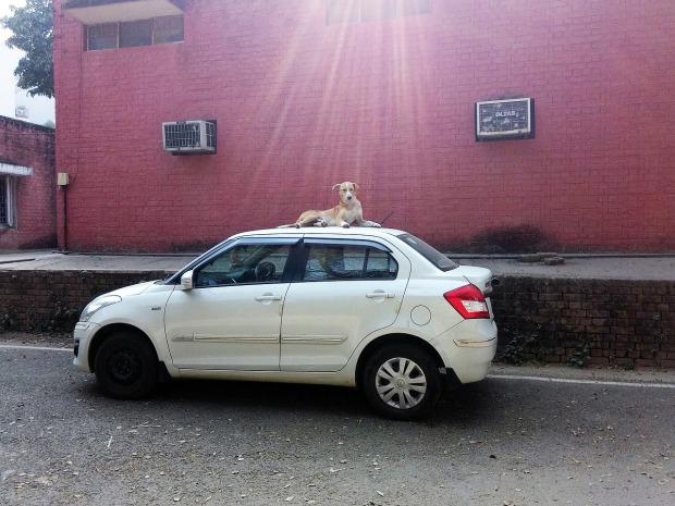car-1664425_1280