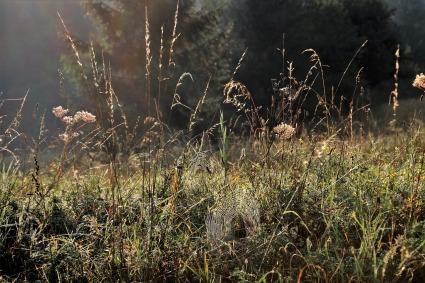 dry-grass-3648912_1280