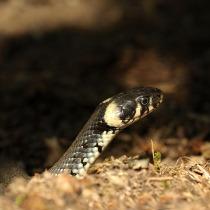 reptile-3213942_640