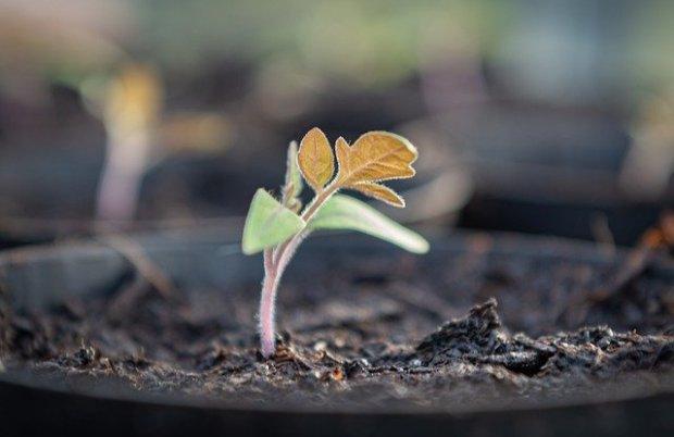 seedling-4933588_640