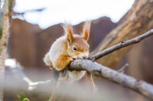 the-squirrel-4142446_1280