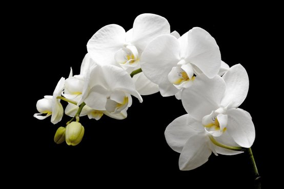 orchid-2124803_1280
