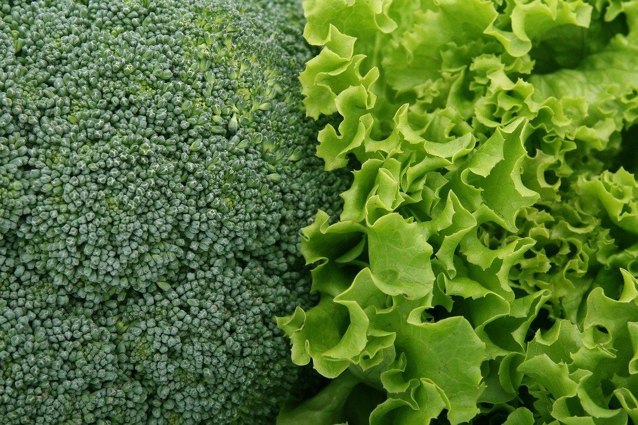 broccoli-1239430_1280