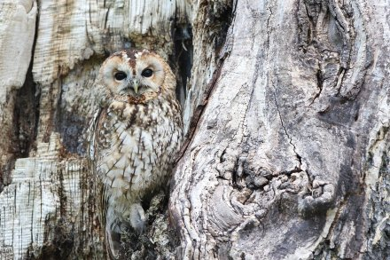 owl-1576572_1280